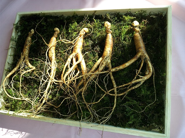Red Ginseng perhaps one of the best herbs to boost testosterone
