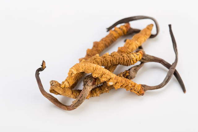 Cordyceps also called Himalayan Viagra
